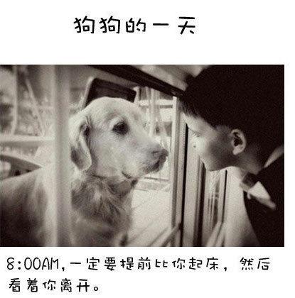 [美图欣赏] 狗狗的一天:你就是它们的十几二十年